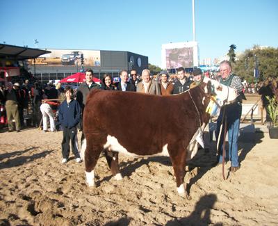 3er mejor hembra de ganadera Hereford de Cabaña San Salvador de Luis Fernández (ubicada al Sur de Uruguay).