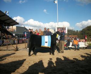 Gran Campeona Aberdeen Angus de Compañía Argentina  de Haciendas en momento de su premiación