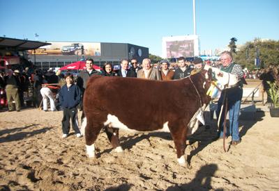 3er mejor hembra de ganadera Hereford de Cabaña San Salvador de Luis Fernández (ubicada al Sur de Uruguay)
