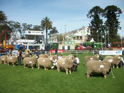Una de las razas lanares que mantiene presencia en la muestra.