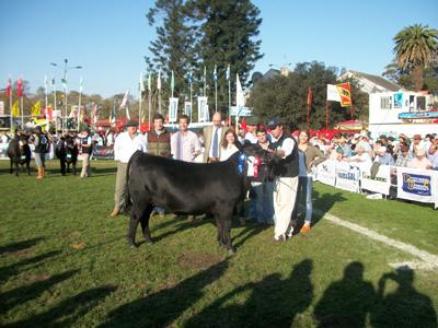 Esta ternera logró además del campeonato de la categoría el  tercer lugar en la fila final de Angus del Prado. Un gran futuro.