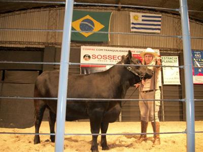 Cabaña Cambá Pytá, estuvo rematando por primera vez en Brasil. En la imagen Mariel Romero con una ternera. Se vendió el 50% de una ternera de la generación 2012 en 11 mil dólares.