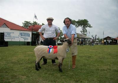 HAMPSHIRE DOWN PO Gran Campeona Hampshire Down PO de La Estanzuela de Henderson en la Expo Artigas.