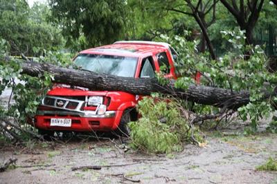 Otro joven conductor que salvó su vida por verdadero milagro cuando venía conduciendo  la camioneta Nissan que muestra la fotografía y un grueso árbol cayó sobre el motor  de la misma. Por algunos centímetros no fue sobre la cabina del conductor.