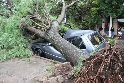 El joven propietario de este automóvil, estacionado en Amorim, al Norte de Diego Lamas,  cuando observó que las raíces del árbol se movían, subió al mismo para correrlo. En ese  momento cayó el árbol encima. Apenas le rozó una pierna y pudo salir por la otra puerta.