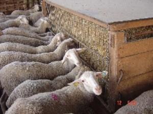 lanares1201