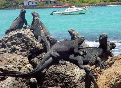 Galápagos0602