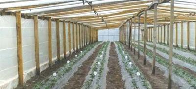 Horticultura1.jpg