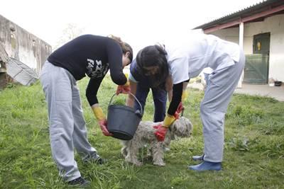 El rescate de los perros callejeros también dio para la polémica.