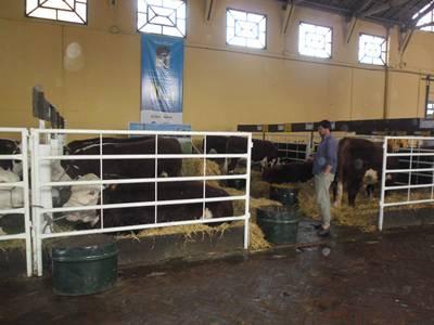 Hereford sigue siendo la raza bovina de mayor cantidad de ejemplares en elpaís.