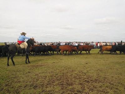 Los participantes observando uno de los lotes de Aberdeen Angus (Foto gentileza de Lucas Farías de El Observador)