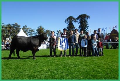 Gran Campeona de la raza Brangus, de Pablo Bove Itzaina