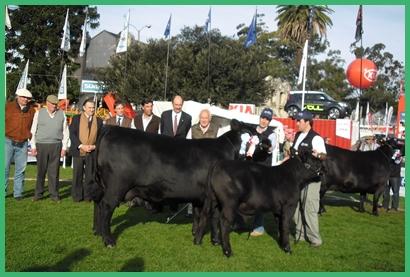 Reservada Gran Campeona Aberdeen Angus expuesta por Sociedad Ganadera San Salvador, y Mailhos y Otros