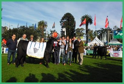 Protagonistas del triunfo Jurado, criadores, cabañero, en alguna medida todos sumaron esfuerzo para lograr la  Gran Campeona Aberdeen Angus 2014 para Bayucuá expuesta por Bayucuá y Fernando Dighiero.