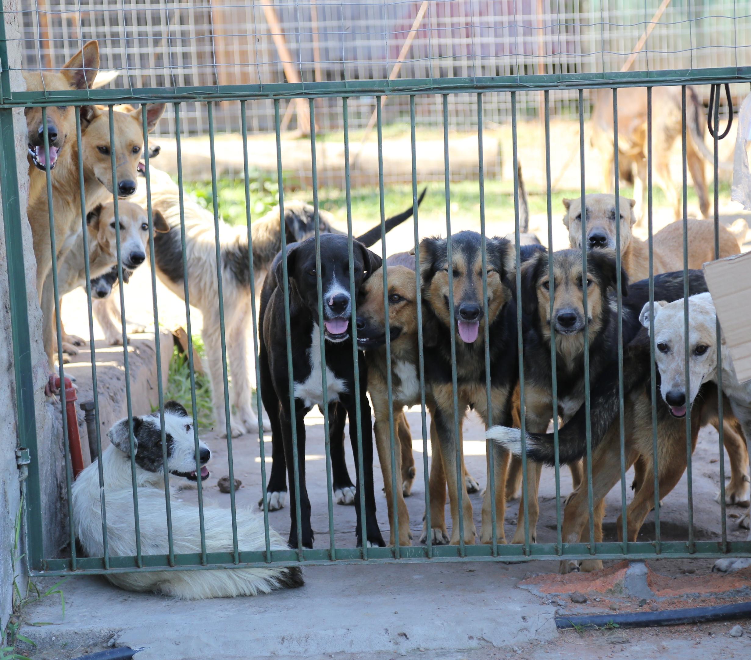 Tras las rejas y quizás no  en las condiciones ideales,  pero cuidados, conviven  más de 300 canes