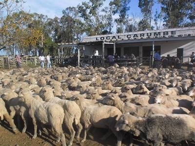 Alrededor de 1.600 lanares pasarán hoy por la pista del Local Carumbé