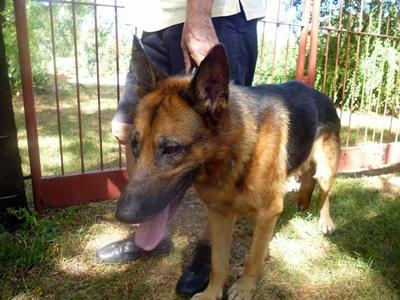<p>TONI primer perro infectado</p>