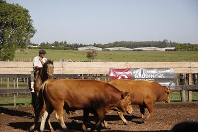 Los Limousin de la Quesería integran la oferta