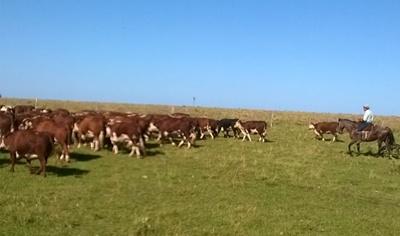 Las pasturas y los ganados están en buenas condiciones