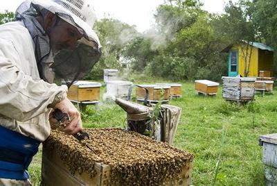 ch_apicultura