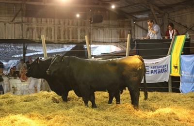 Los toros planteleros promediaron 6.940 dólares