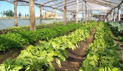 horticultura3011
