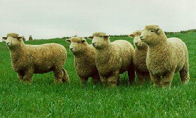 La población de ovinos mostró un leve descenso
