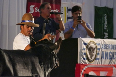 Uno de los animales que integran la oferta  del Gala Angus. Foto: El País