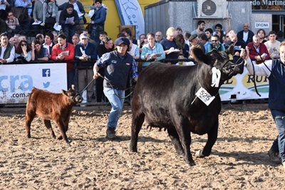 Vaca de Milkland que ganó el campeonato en la Expo Palermo