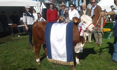 Reservada Gran Campeona Braford