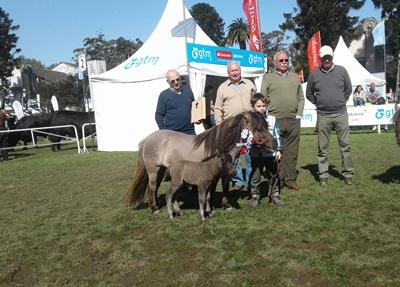 Gran Campeona de la raza Shetland Pony