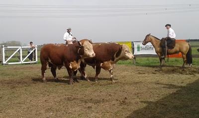 Parte de la torada vendida ayer en Ñu Porá