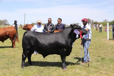 Gran Campeón Aberdeen Angus de Cabaña San Rafael