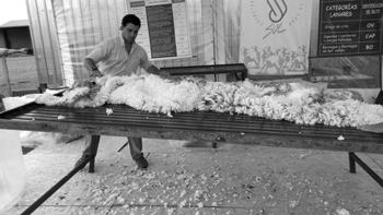 Muestra acondicionamiento de lana