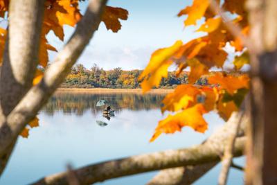 autumn-2902459_960_720