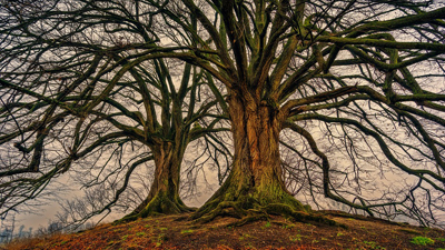 tree-3097419_960_720