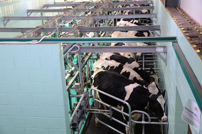 milking-1805390_960_720