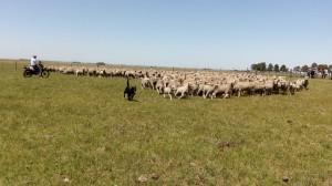 lanares