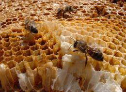apicultura_0