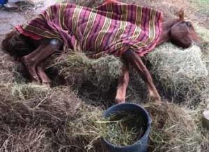El animal fue rescatado en un estado deplorable por un grupo de jóvenes que  hicieron lo mejor que pudieron pero no fue suficiente