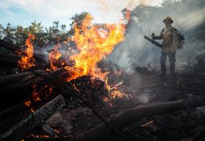 Tan solo el 30 de julio fueron contabilizados 1.007 focos en la selva amazónica, lo que supone  el mayor número para el mes en los últimos 15 años. EFE/Fernando Bizerra Jr./Archivo