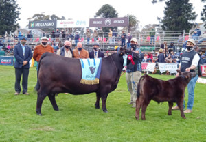 Reservada Gran Campeona Aberdeen Angus